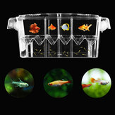 10.6inch Aquarium Tank Transparent Fish Breeding Isolation Incubator Fish Hatchery