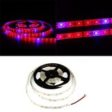 1M 2M 3M 4M 5M 3:1 5050 SMD LED Waterproof Hydroponic Plant Grow Strip Light DC12V