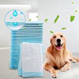 Fraldas Pet Cachorro Fraldas descartáveis de absorção pesada Pet Cachorro Formação de fraldas de urina para Cachorros Limpeza de fraldas
