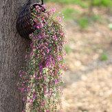 Моделирование Ротанг Растение Цветочный искусственный поддельный цветок Гостиная Стены Украшения Домашний декор