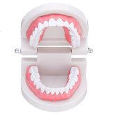 1:1人間の歯科用モデル歯オープンクローズモデル歯肉可視解剖学的デモ歯ブラシフロッシング教授医療モデル