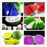 Egrow 50Pcs/Pack Watermelon Seeds Garden Colorful Edible Green Yellow White Watermelon Seeds