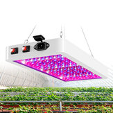 5000 / 8000W 216 / 312LED Grow Light Pflanzenlampenpaneel Vollspektrum für Hydroponik-Innenblumen