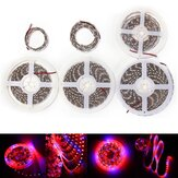 0.5M/1M/2M/3M/4M/5M Waterproof Red:Blue 5:1 SMD5050 Full Spectrum Grow Plant LED Strip Light DC12V