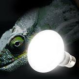 E27 25 W 40 W 60 W 75 W 100 W UVA Gloeilamp Reptiel Huisdier Terrarium Broeder Heater Lamp AC220-240V