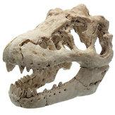 ドラゴン樹脂水族館の装飾魚タンクの樹脂の飾りのクロコダイルの頭蓋骨