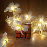 Батарея Powered 3M 5M Frangipani Shaped Warm White Fairy String Light для рождественской вечеринки