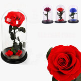 Forever Rose Beauty & The Beast Immortal Fresh Flower Christmas Unique Gifts Decorations
