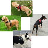 Pet Control Harness ajustável Cachorro e Cat Soft Mesh Walk Collar Safety Strap Vest