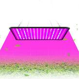 5000W LED Full Spectrum Растение UV Grow Light Veg Лампа Для гидропоники в помещении Растение