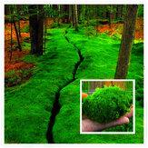 Egrow 100個/パックモスの種子ホームDIY盆栽の装飾芝種子鉢植えの種子