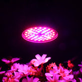 Ampoule LED Grow Light E27 60W 2835 SMD Full Spectrum Plant Hydroponic Aquarium AC85-265V
