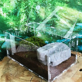 Turtle Tank Reptile Top Habitat Filter Kit Aquatic Grote acryl fokkooi Niet-aquarium