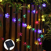 Solar Powered 7M LED Sakura Flower String Light Long Bright + Single Mode / 7 Mode Outdoor Garden Blossom lampada