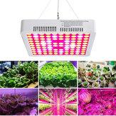 300 Вт LED Grow Light Полный спектр Hydro Veg Flower Растение Медицинская Лампа Панель