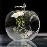 Apple Form Blumen Glasvase Moss Micro Landschaft Eco Bottle