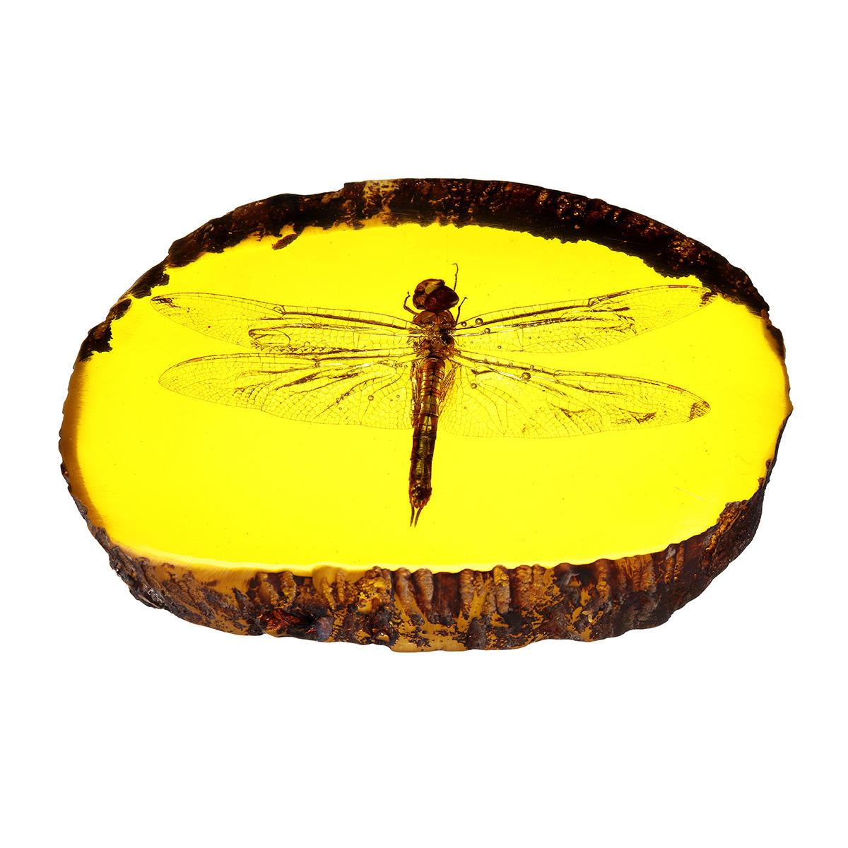 Ámbar Fossil Insects Dragonfly Pulido manual Especímenes de insectos Decoraciones