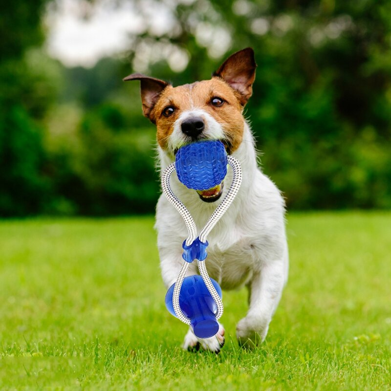Pet Molar Bite Ball Cats Dogs Training Multifunction Pet Molar Rubber Chew Ball Cleaning Teeth Safe Elasticity Soft Puppy Suction Cup Pet Toys