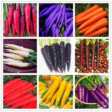 Egrow 500 sztuk / opakowanie Kolorowe nasiona marchwi Red White Purple Origanic Zdrowe nasiona roślin warzywnych