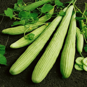Egrow 50 Pcs/Bag Giant Long Green Cucumber Seeds Crisp Sweet Fruit Organic Vegetable Seed